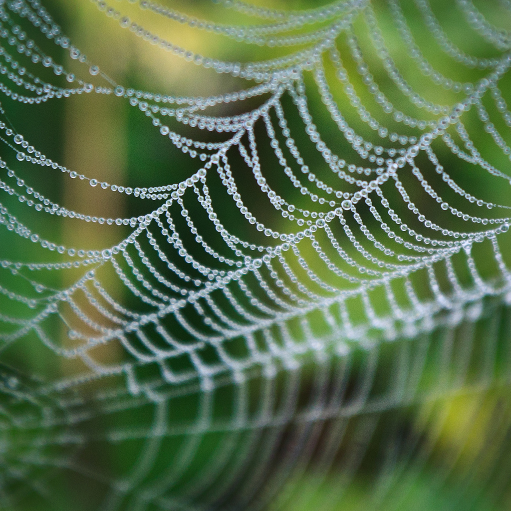 pearls of the spider - large